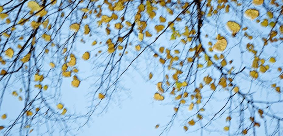 Amarillo, contrastes. Foto de Gry Garness