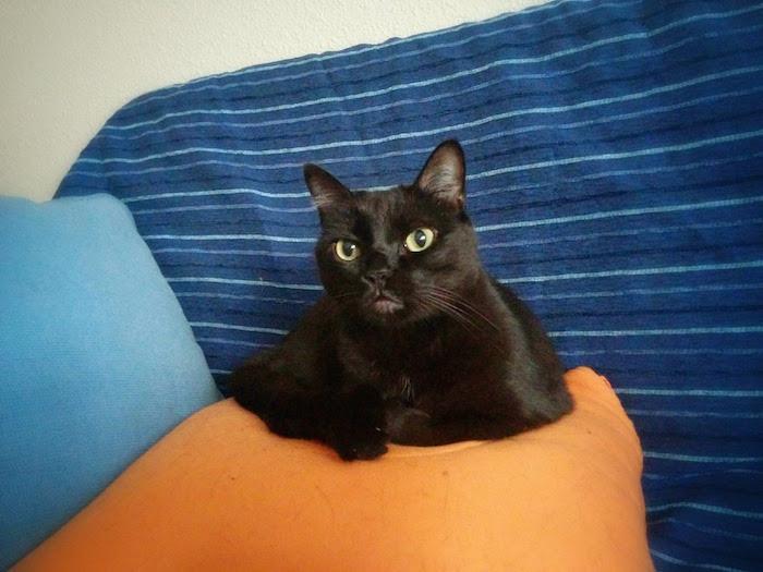 Lula, el secreto de los gatos. Foto de MA Blanco