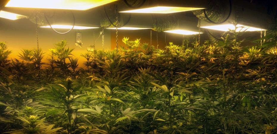 Guerra contra la marihuana en Almería