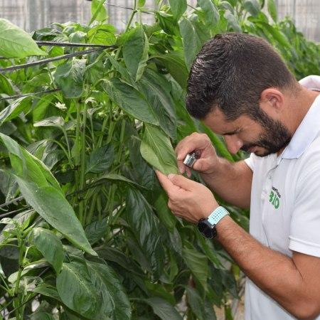 Rubén Nieto, en su invernadero de producción ecológica en Almería.